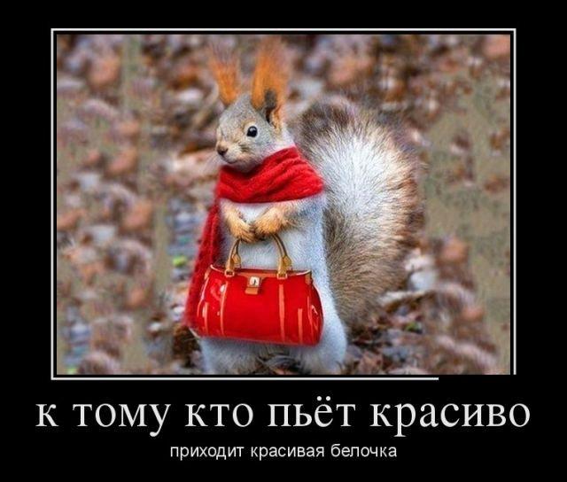 demotivatory_30.jpg